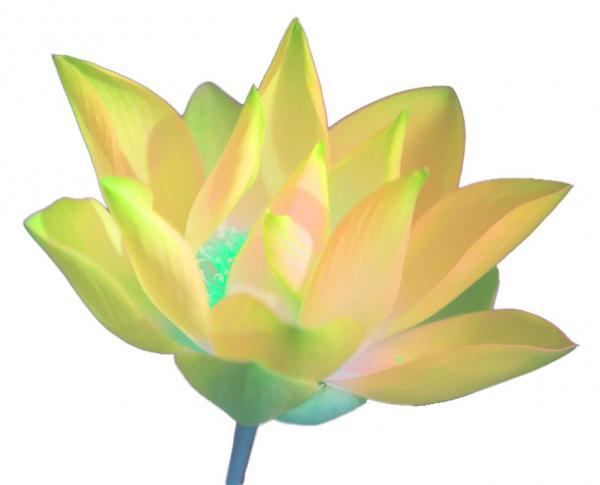 Meditation chicago free online